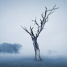 In the Mist by Svetlana Sewell