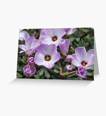 Pink flower #1 Greeting Card