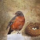 The Birds Nest by Crista Peacey