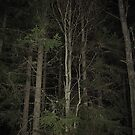 Night Forest by ArtOfE