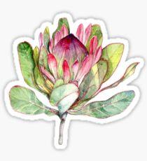 Protea Flower - Botanical Art Sticker