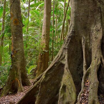 Rainforest 01 by Pierre