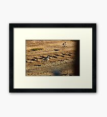 Kill Deer Framed Print