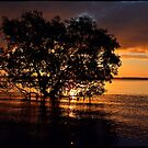 Mangrove tree by andreisky