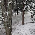 """""""Winter Woods""""... prints and products by Bob Hall©"""