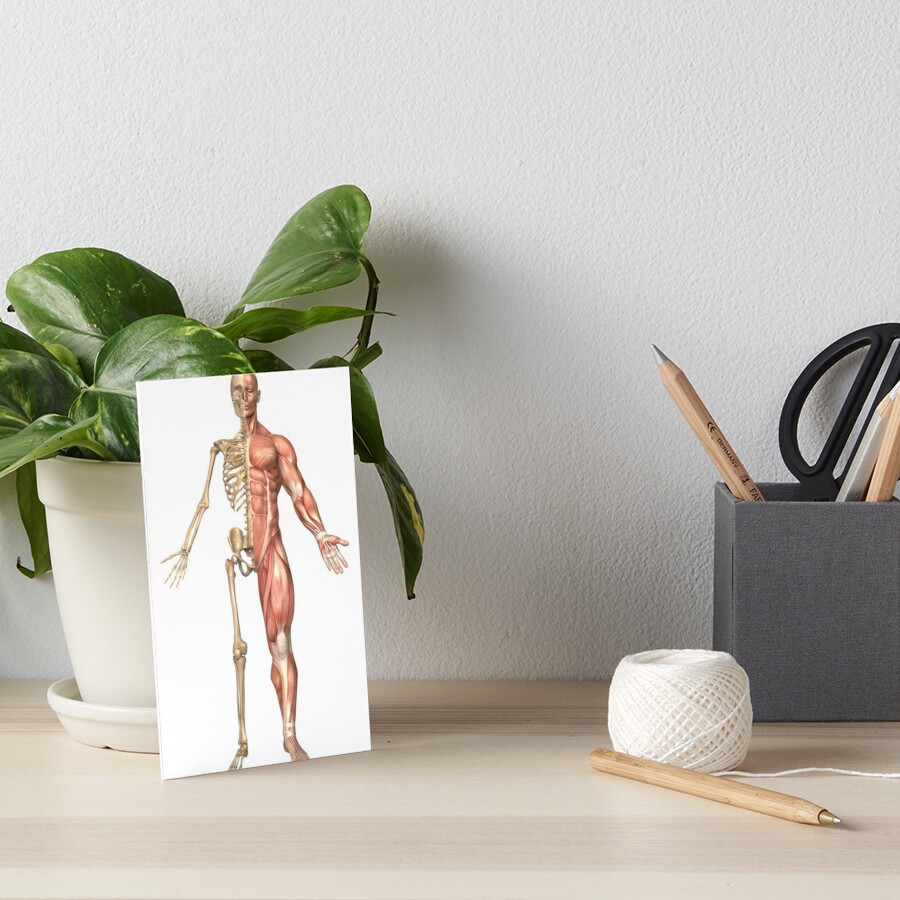 Láminas de exposición «El esqueleto humano y el sistema muscular ...