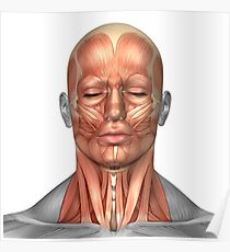 Anatomie der menschlichen Gesichts- und Nackenmuskulatur, Vorderansicht. Poster