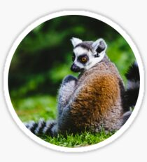 Young Lemur Sticker