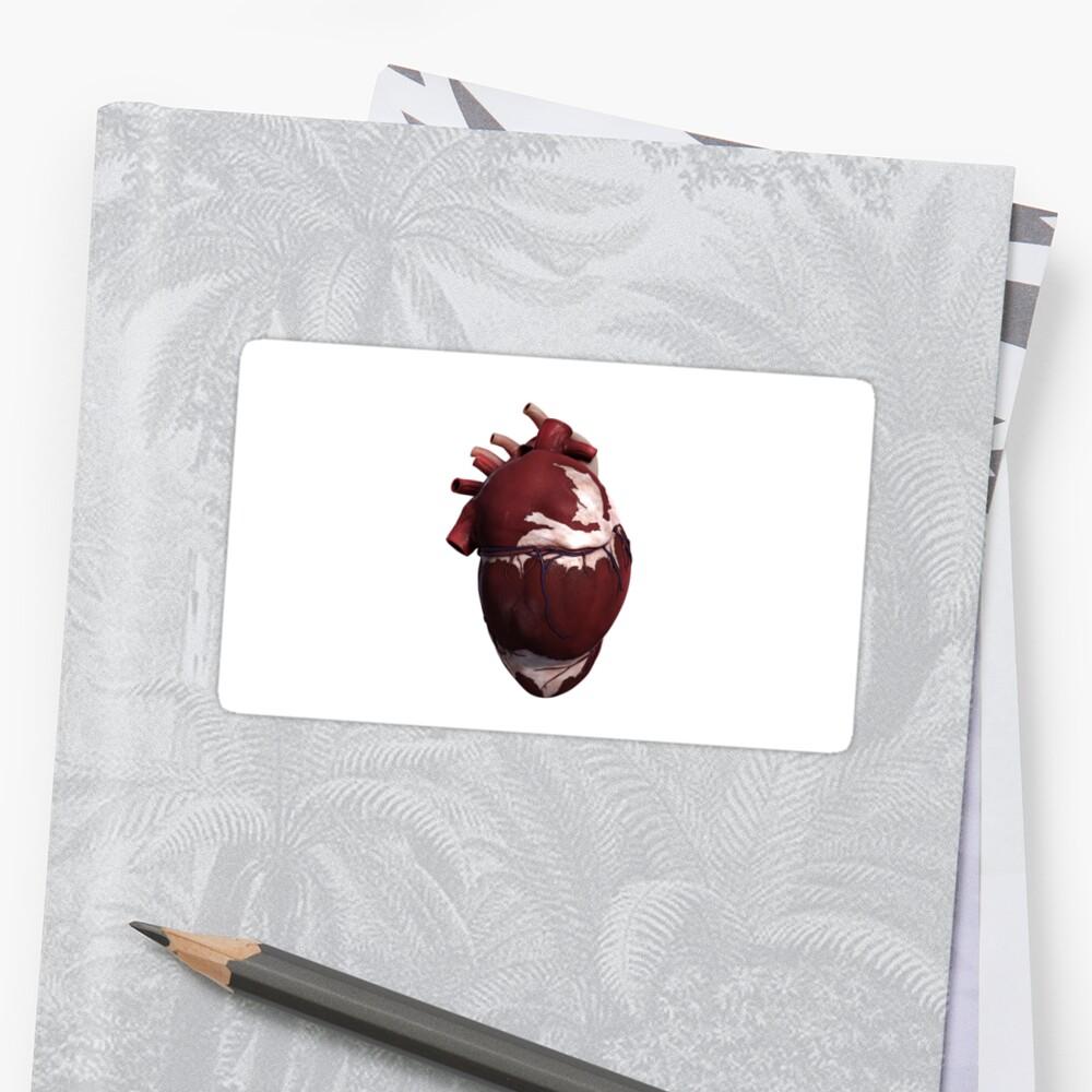 Pegatinas «Vista tridimensional del corazón humano, lado izquierdo ...