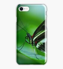 Papilo Rumanzovia Butterfly on a green leaf iPhone Case/Skin