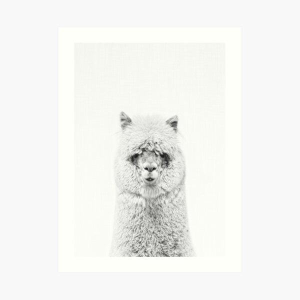 Alpaca Hairy Art Print