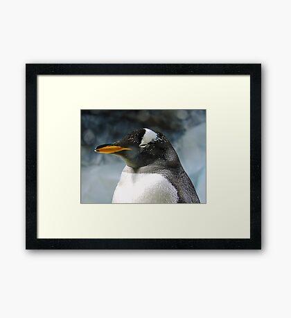 Sleepy Snowy Penguin Framed Print