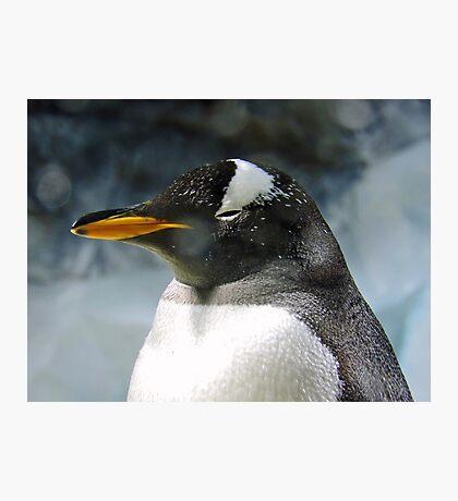 Sleepy Snowy Penguin Photographic Print