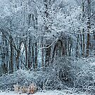 Winter Woodland by Eileen McVey