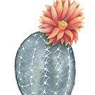 Gymnocalycium Baldianum - Cactus Flower by boelterdesignco