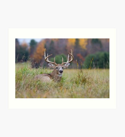 Autumn in Canada - White tailed deer Buck Art Print