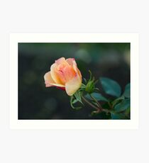 Autumn Roses Art Print