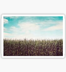 Cornfield Sticker