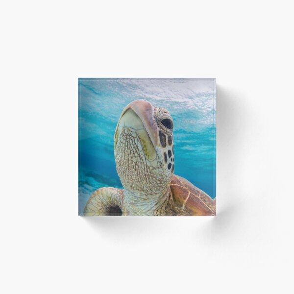 Turtle close-up Acrylic Block