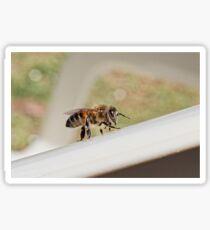 Honey Bee (Apis Mellifera)  Sticker