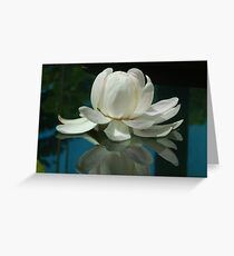 Waterlilly ABG Greeting Card