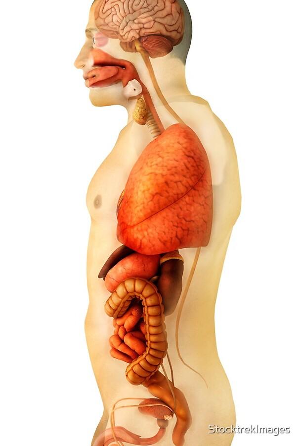 Magnífico Monitorear La Anatomía Lagarto Inspiración - Anatomía de ...