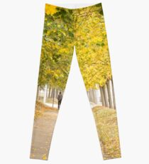 Walking under the trees in Autumn I Leggings