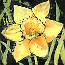 Spring Daffodil by Ruth S Harris