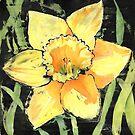 Spring Daffodil by Ruth S Harris