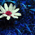 Kunst Blume von Mariia Sorokina