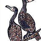 The Cormorants by dosankodebbie