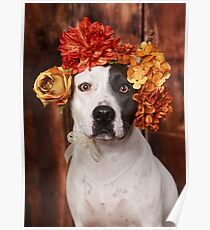Pit Bull with flower crown Poster