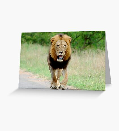 RIGHT DIRECTION - THE LION - Panthera leo - LEEU Greeting Card