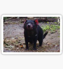 Tasmanian Devil Sticker