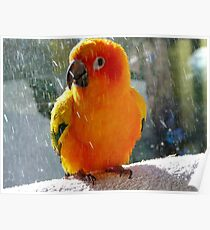 Do You Need A Little Sunshine In Your Life?... - Sun Conure - NZ Poster