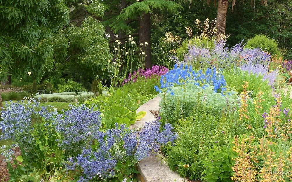 Perennial Border by Jeanette Varcoe.