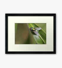Kermit Green Framed Print