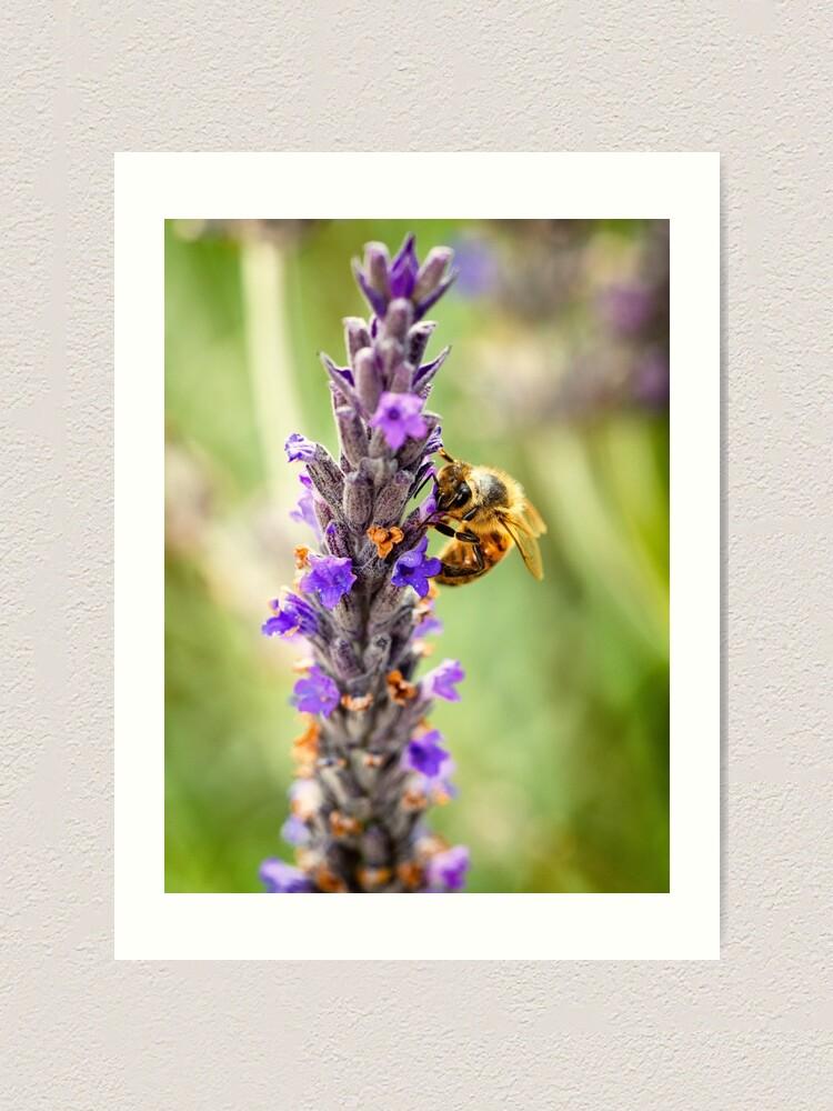 Impression artistique ''Honey Bee': autre vue