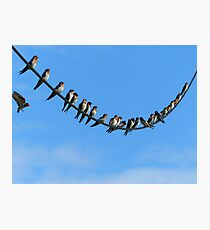 Bird On A Wire - Welcome Swallows NZ Photographic Print