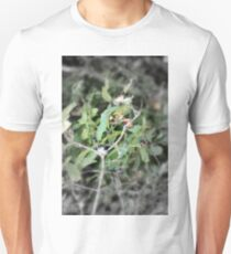Cascara or Buckthorn T-Shirt
