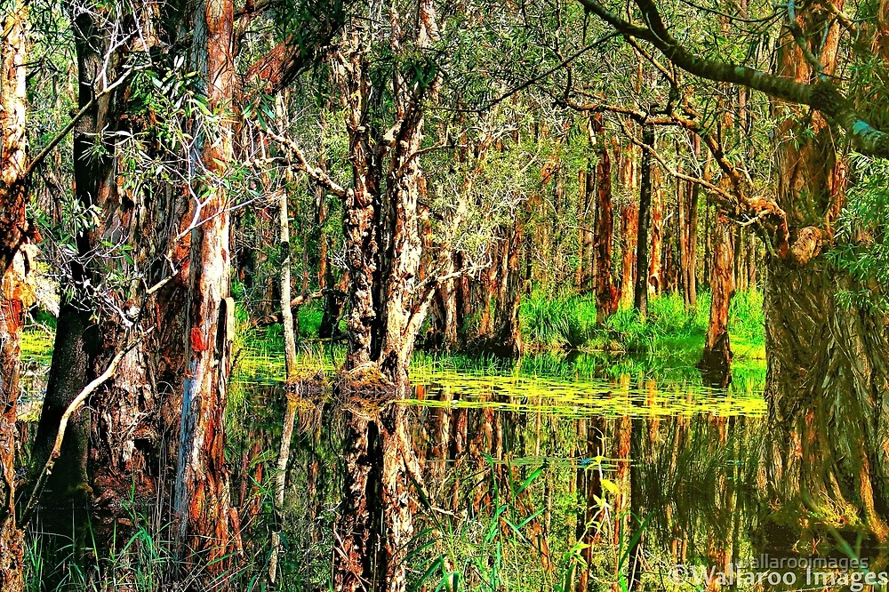 Wetland Reflections by wallarooimages