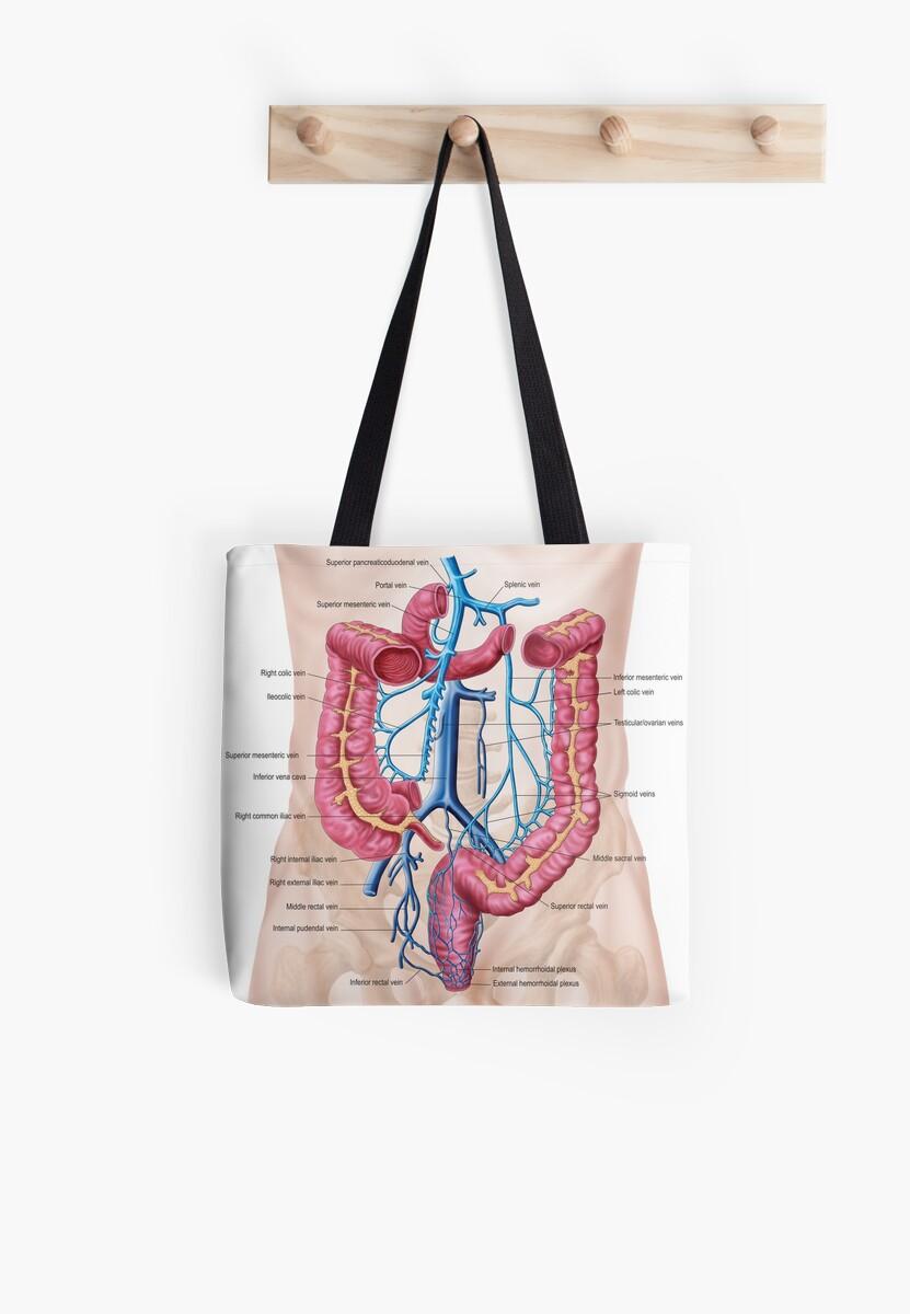 Bolsas de tela «Anatomía del sistema de la vena abdominal humana ...