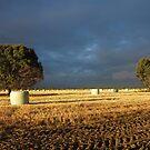 Farmlife 2 by Digby