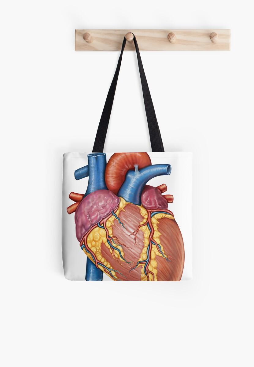 Bolsas de tela «Anatomía macroscópica del corazón humano.» de ...