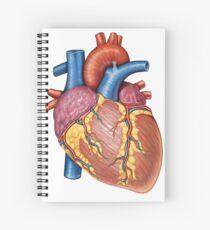 Gross anatomy of the human heart. Spiral Notebook