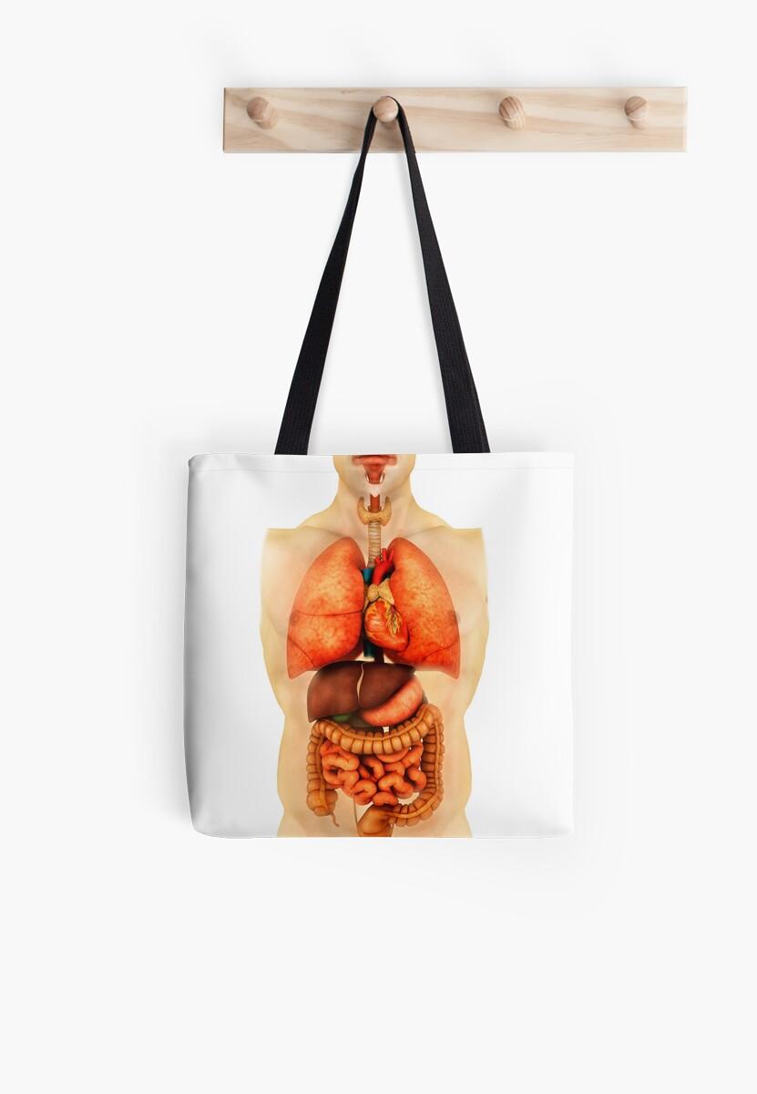 Bolsas de tela «Anatomía del cuerpo humano mostrando órganos ...