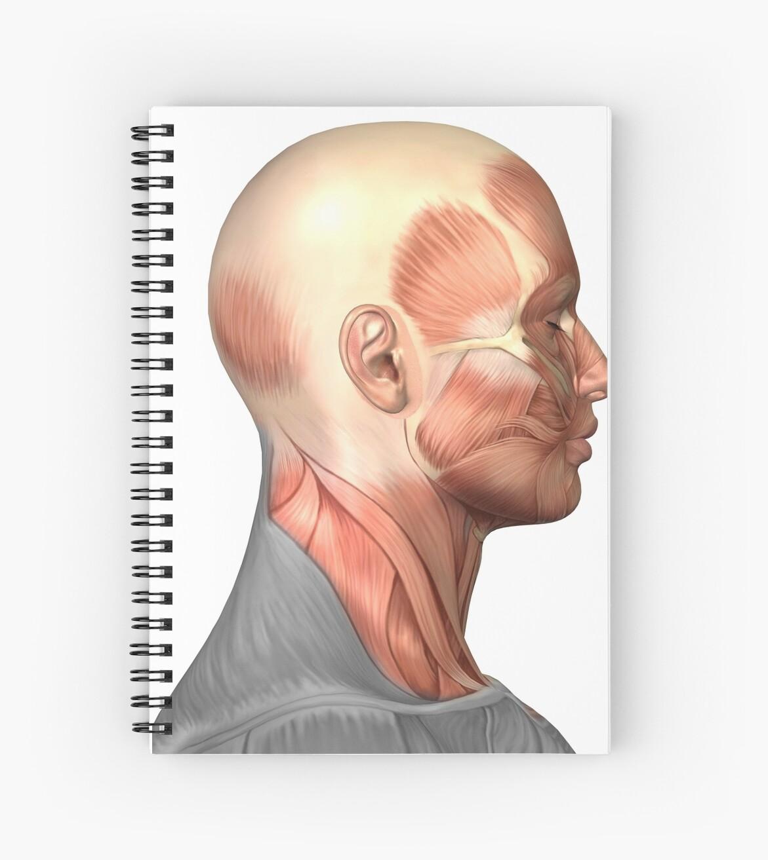 Cuadernos de espiral «Anatomía de los músculos de la cara humana ...