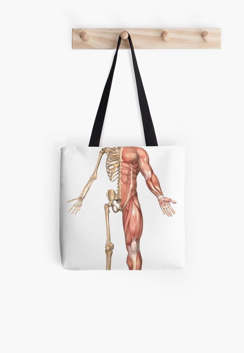 Bolsas de tela «El esqueleto humano y el sistema muscular, vista ...