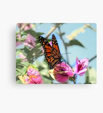 Butterfly, Puerto de la Cruz Canvas Print