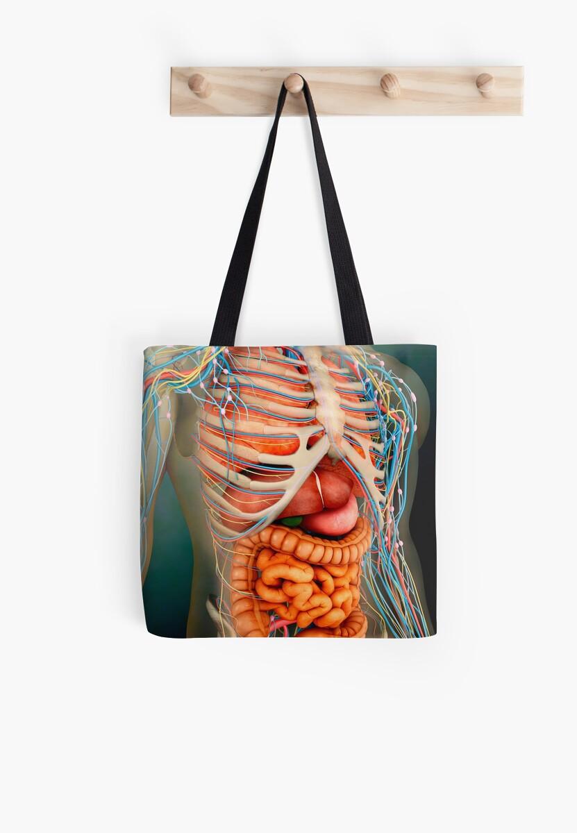 Bolsas de tela «Vista en perspectiva del cuerpo humano, órganos ...